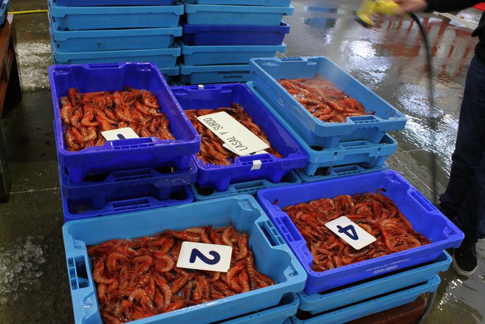 Anualmente se celebra el Concurso Internacional de Cocina Creativa de la Gamba Roja de Dénia